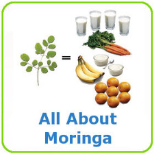 Moringa Oleifera is called the miracle tree, because it contains more amino acids, antioxidants, vitamins and minerals than many of our best known healthy fruits and vegetables.